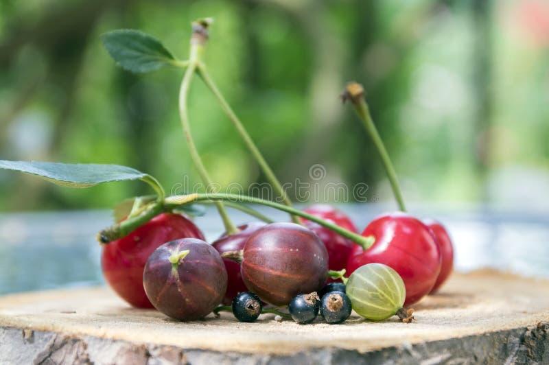 Groep vers gerijpt fruit op houten stootkussen, rode morellen, donkere kruisbes en zwarte bes stock foto's