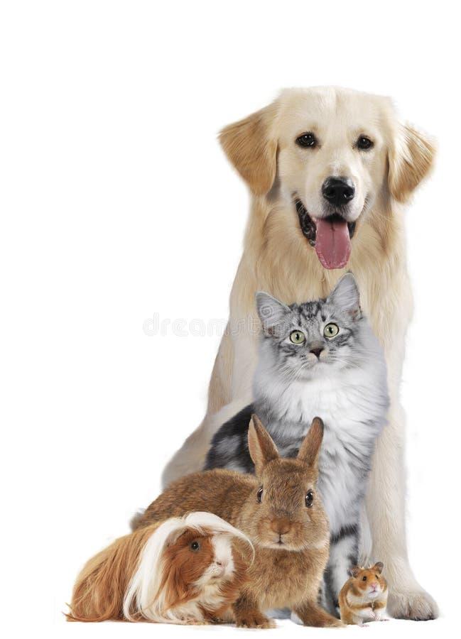 Groep verschillende huisdieren stock foto's