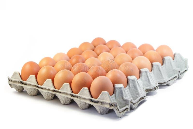 Groep verse eieren in document dienblad op witte achtergrond stock afbeelding