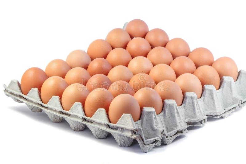 Groep verse eieren in document dienblad op witte achtergrond royalty-vrije stock foto