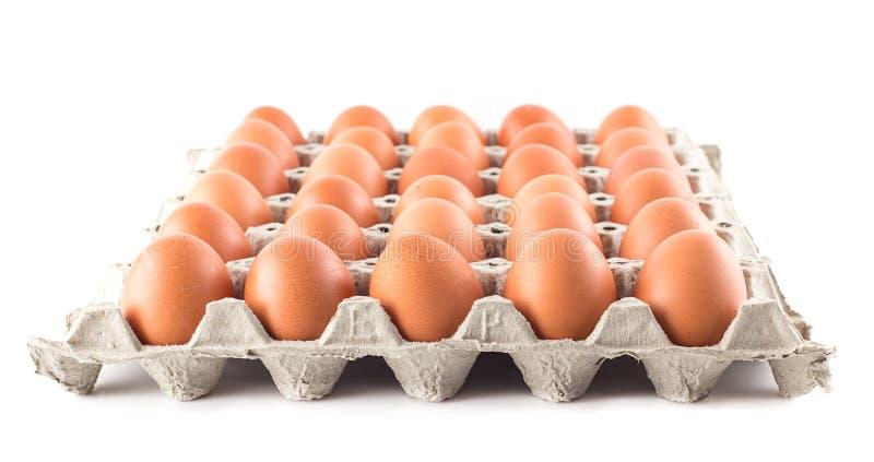 Groep verse eieren op wit stock fotografie
