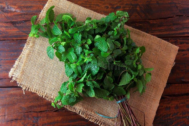 Groep verse organische groene munt op rustieke houten lijst Aromatische pepermunt met geneeskrachtig en culinair gebruik royalty-vrije stock afbeelding