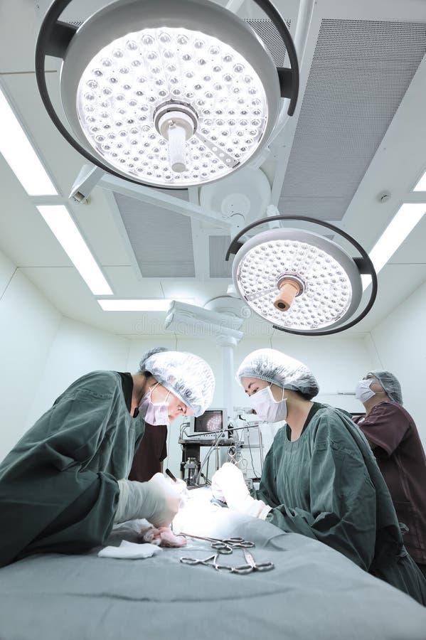 Groep veterinaire chirurgie in verrichtingsruimte royalty-vrije stock foto's