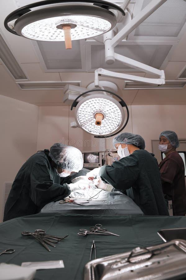 Groep veterinaire chirurgie in verrichtingsruimte stock foto