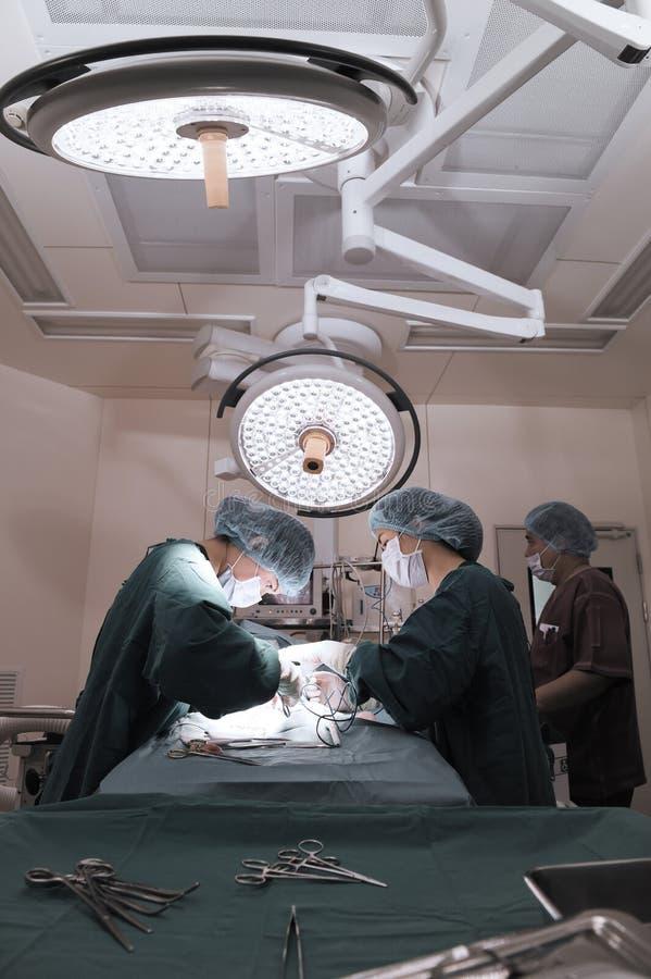 Groep veterinaire chirurgie in verrichtingsruimte royalty-vrije stock fotografie