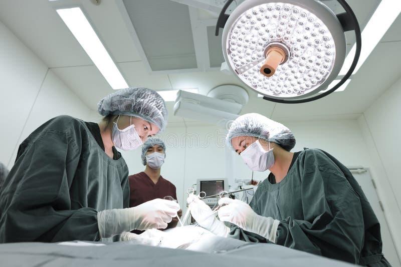 Groep veterinaire chirurgie in verrichtingsruimte stock afbeelding
