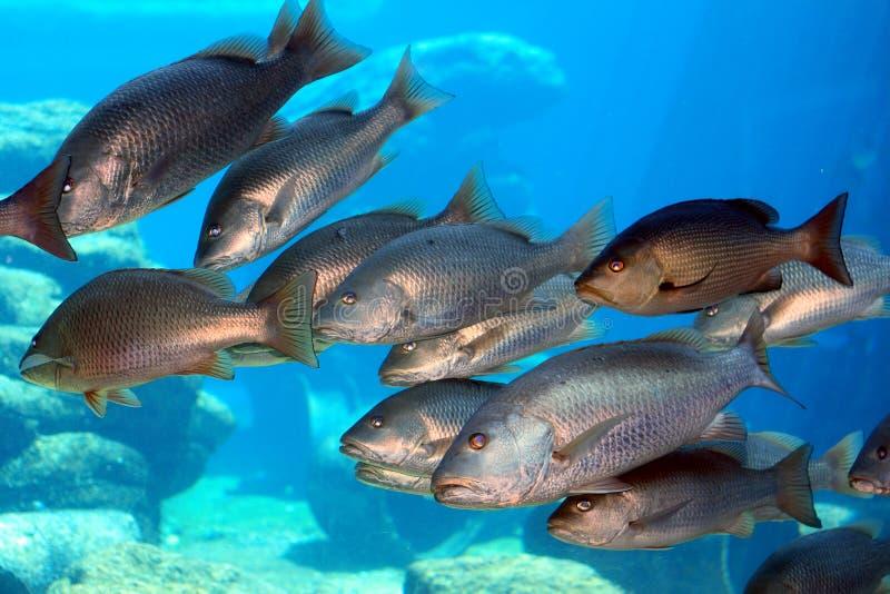 Groep vissen stock afbeelding
