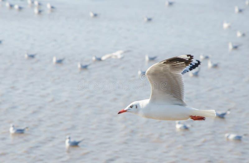 Groep vliegende zeemeeuw royalty-vrije stock fotografie