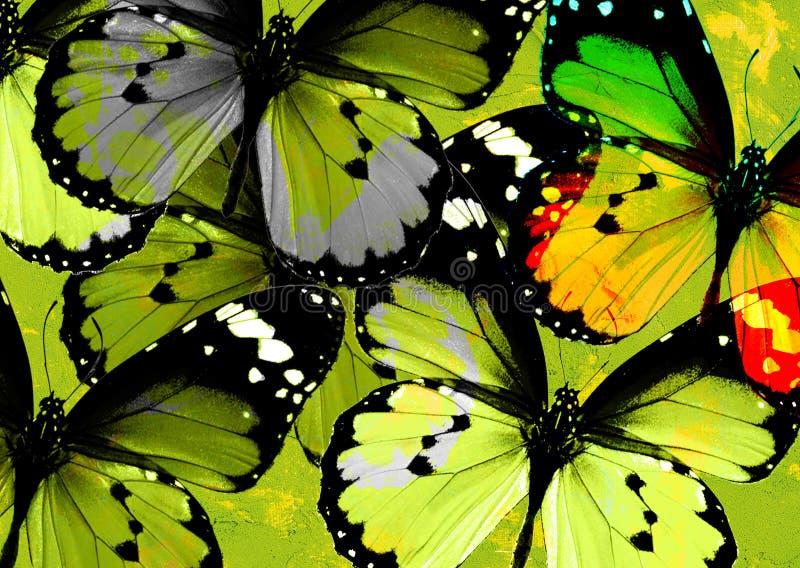 Groep vlinders stock afbeelding