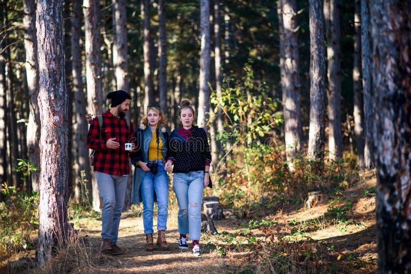 Groep vrienden op een wandelingsreis stock afbeelding