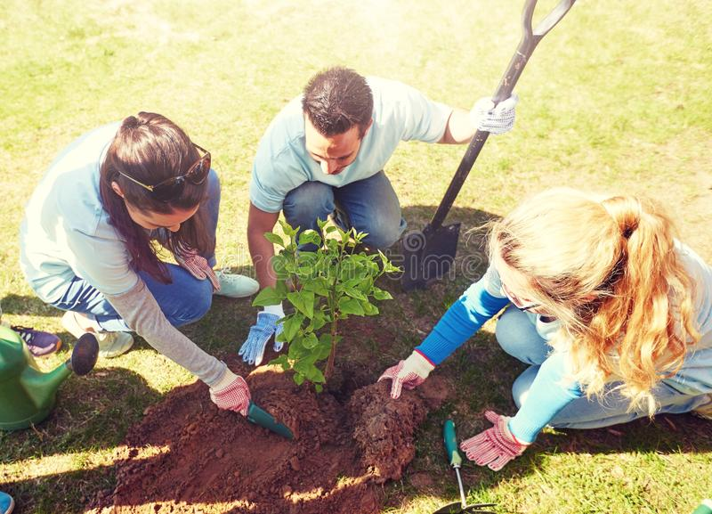 Groep vrijwilligers die boom in park planten royalty-vrije stock afbeeldingen