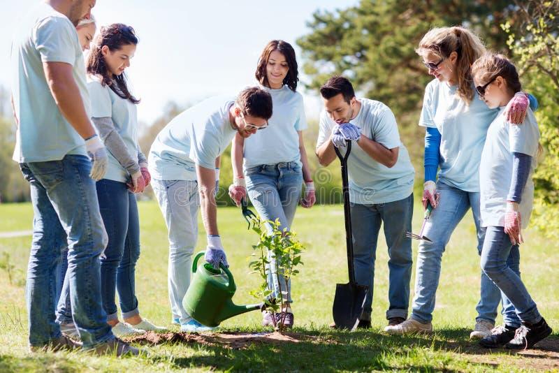 Groep vrijwilligers die en boom planten water geven stock afbeeldingen