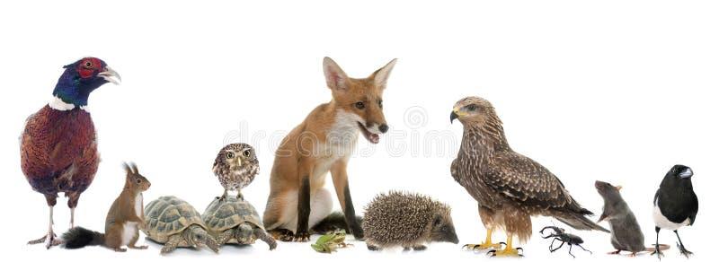 Groep wilde dieren in Europa stock afbeeldingen