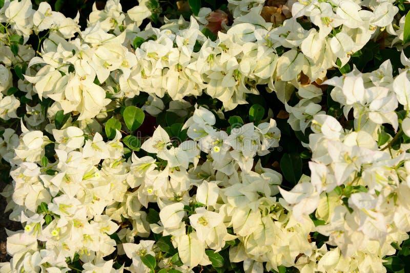 groep witte bloem met witte florale achtergrond royalty-vrije stock afbeelding