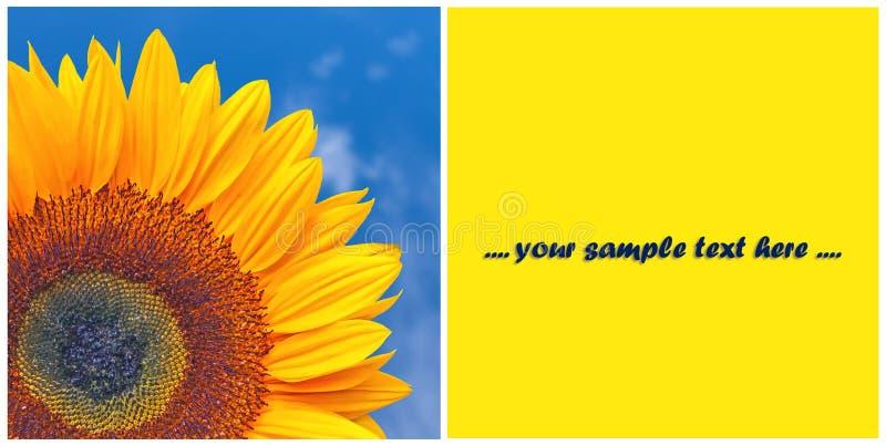 Groetkaart met zonnebloem royalty-vrije illustratie