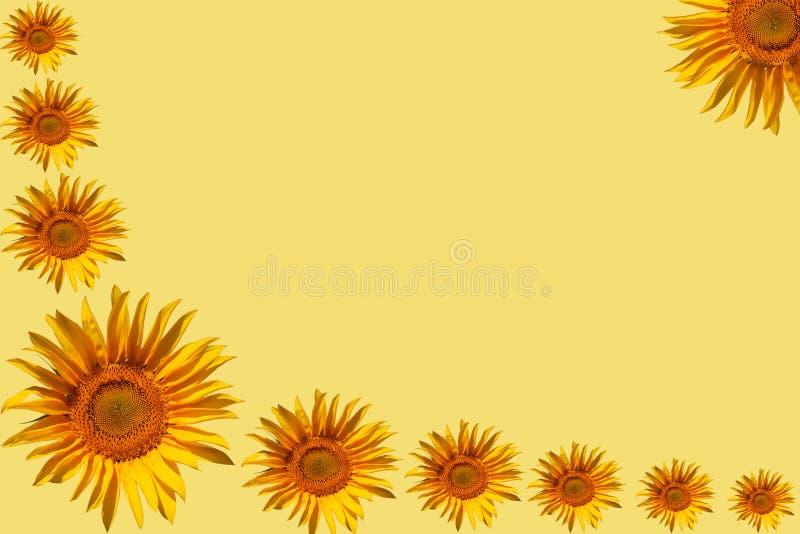 Groetkaart met Zonnebloemen stock afbeeldingen