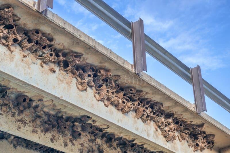 Grona falezy dymówki błota gniazdeczka obrazy royalty free