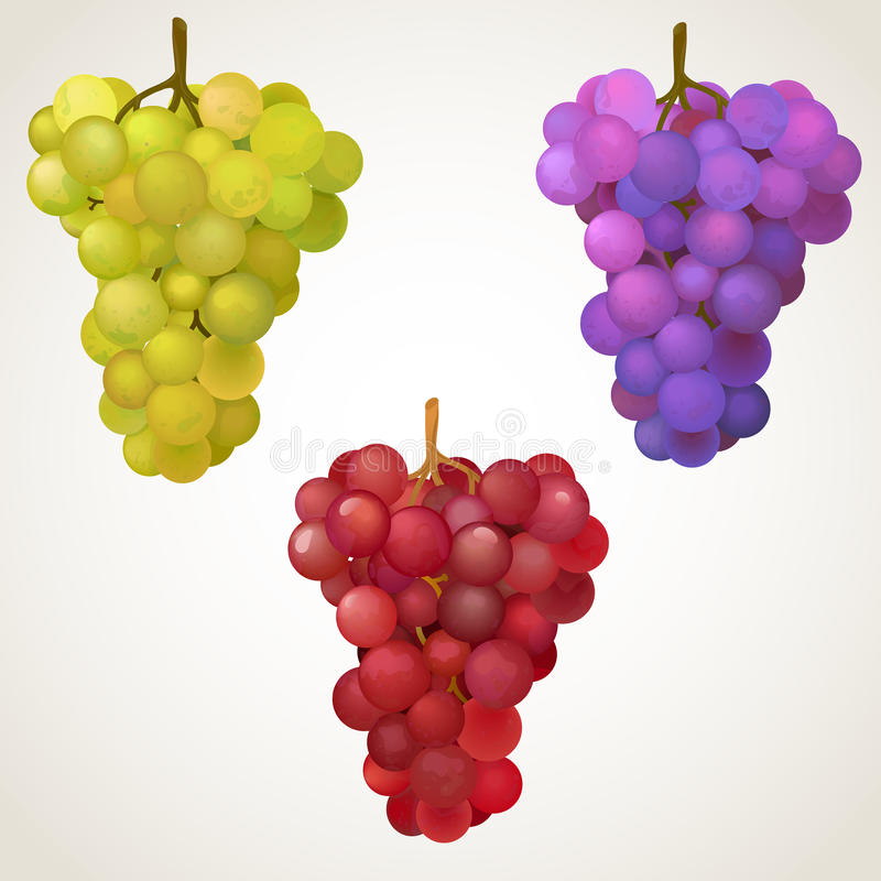grona winogrono trzy ilustracji
