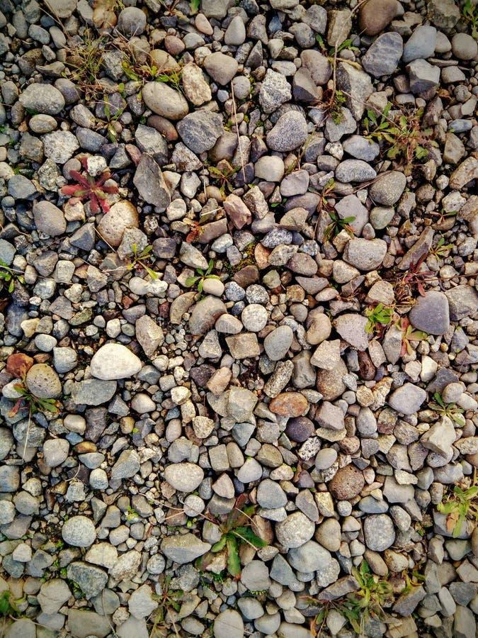 Grond met kiezelstenen en tussen hen, kleine vegetatie wordt behandeld die royalty-vrije stock afbeelding