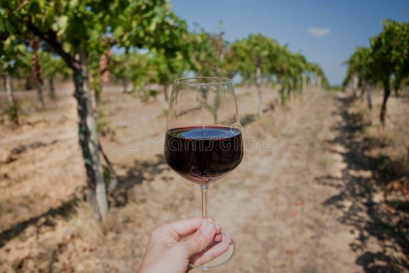 Grond voor wijnstokstruiken en glas wijn in een hand Wijnglas en wijnstok bij landelijk landschap stock foto's