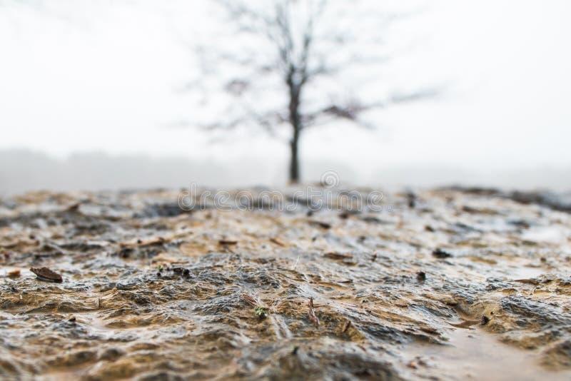 Grondniveau van natte flagstone met boom op achtergrond wordt geschoten die royalty-vrije stock fotografie
