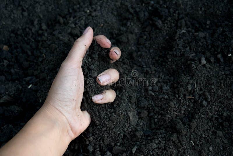 Grondtextuur De grond ter beschikking, palm, cultiveerde vuil, aarde, grond, bruine landachtergrond Het organische tuinieren, lan royalty-vrije stock afbeelding