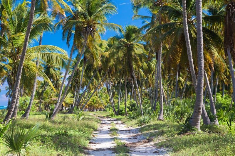 Grondweg in de wildernis Dominicaanse Republiek royalty-vrije stock afbeeldingen