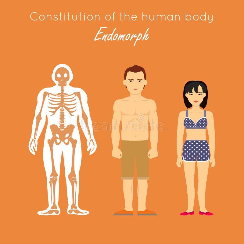 Grondwet van menselijk lichaam Endomorph Endomorf vector illustratie