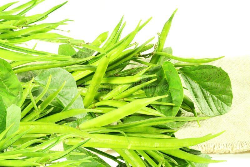 Grono fasola lub guar być indyjskim warzywem w białym tle obraz stock