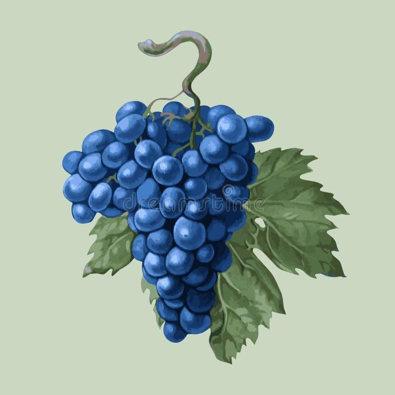 Grono winogrona z liściem ilustracja wektor