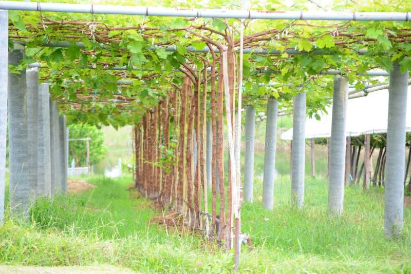 Gronowa roślina fotografia stock