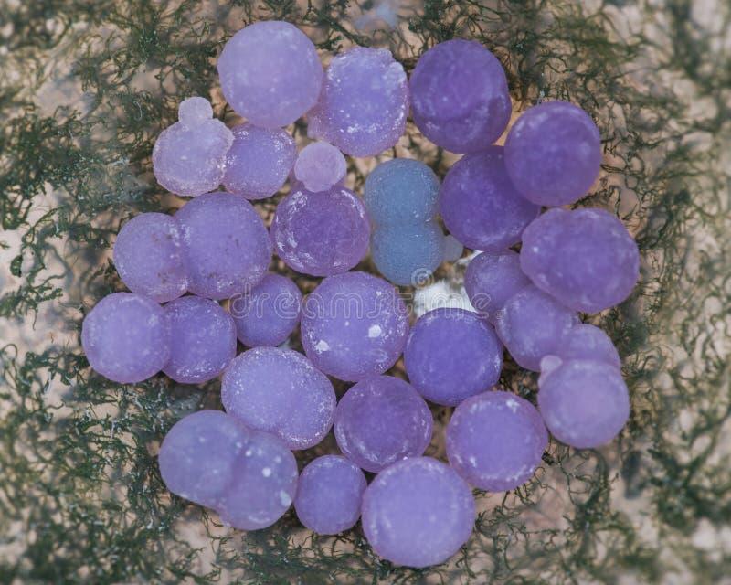 Gronowe agat piłki od Indonezja w mech agata ręka rzeźbiącym polerującym pucharze od Maroko Botryoidal purpury obraz royalty free