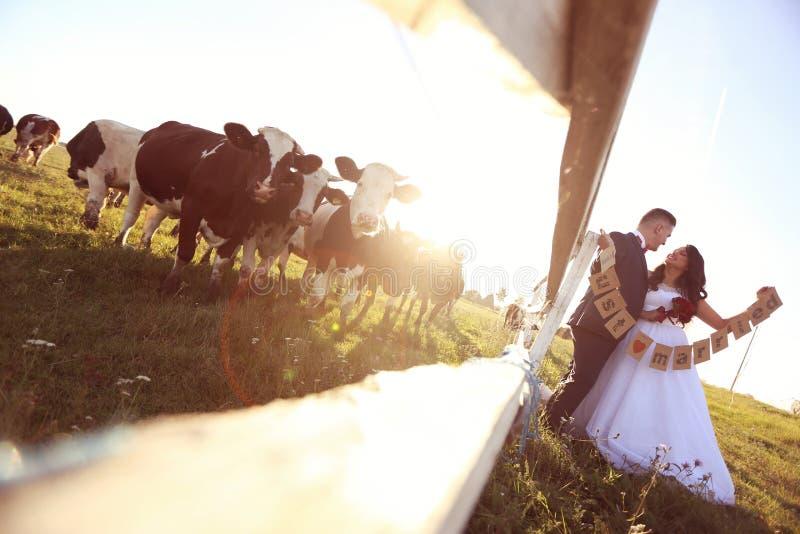 Картинки теленок который невеста