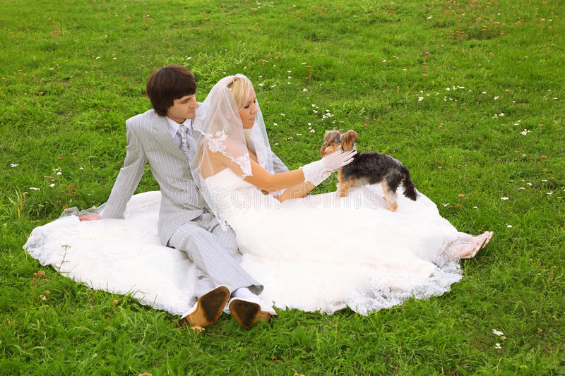 Groom and bride play with small dog stock image