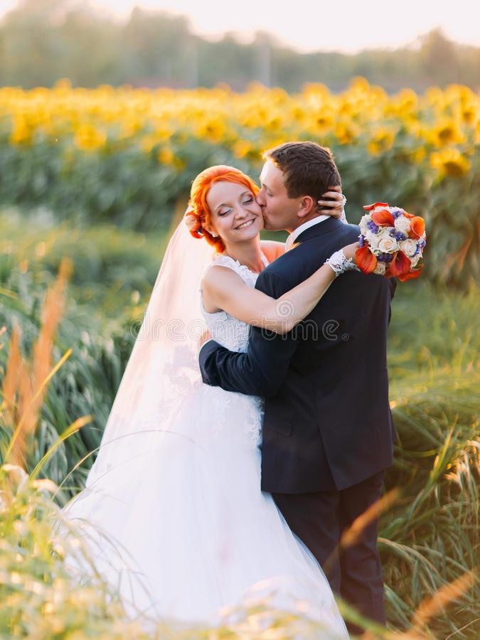 Groom softly kiss bright happy redhair bride with unusual appearance in the sunny sunflower field stock images