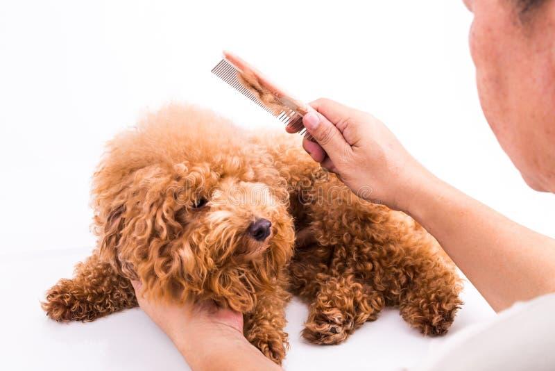 Groomer που κτενίζει το σκυλί, με την de-μπλεγμένη γούνα που κολλιέται στη χτένα στοκ φωτογραφία με δικαίωμα ελεύθερης χρήσης