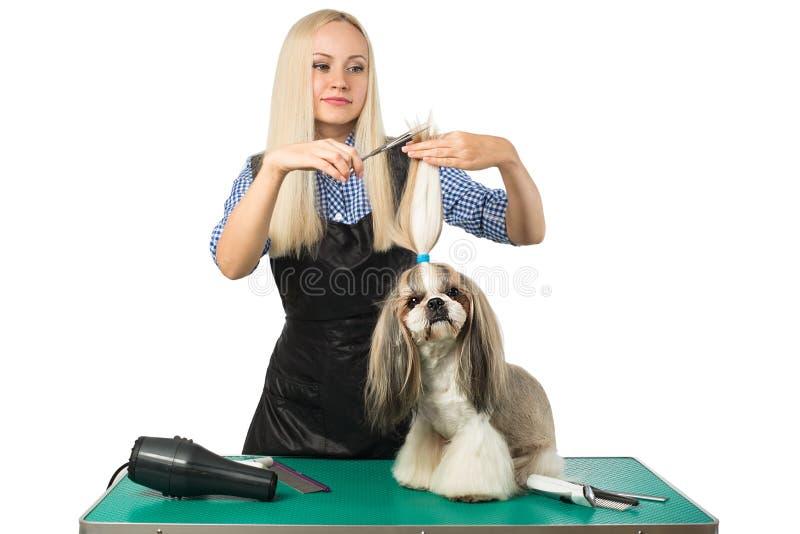 Groomer женщины с ножницами и милым shih-tzu стоковое изображение rf