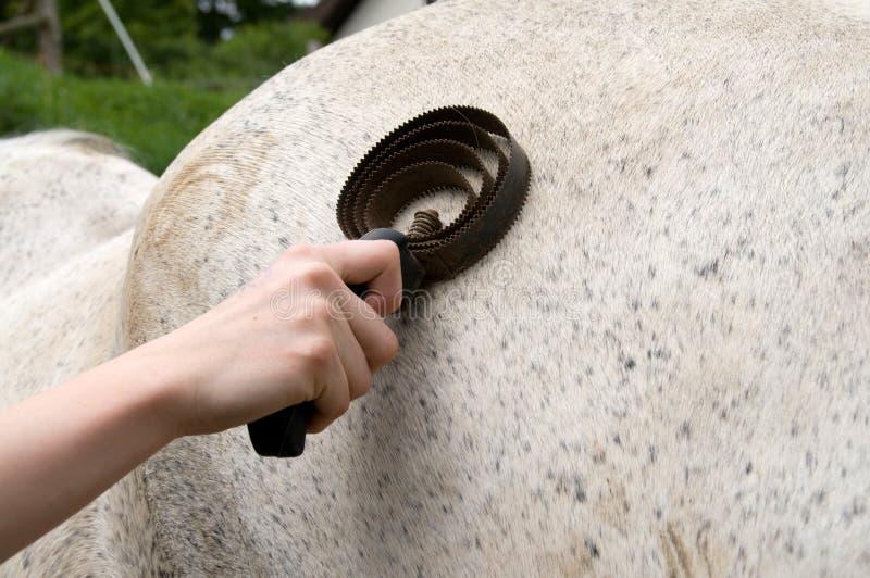 Groomer del cavallo. immagini stock libere da diritti