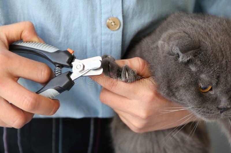 Groomer femenino que arregla las garras del gato en el salón, primer foto de archivo