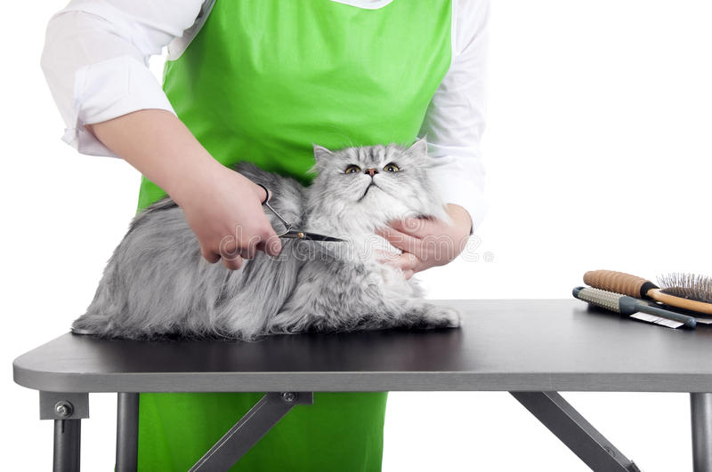Grooming cat stock photography