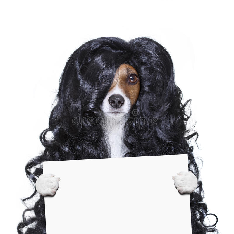 Download Grooming Dog At The Hairdressers Stock Photo - Image: 83721946