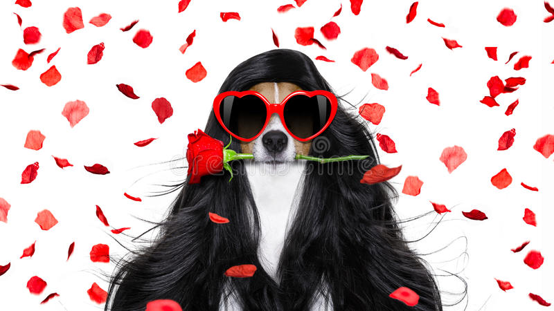 Download Grooming Dog At The Hairdressers Stock Photo - Image: 83721996