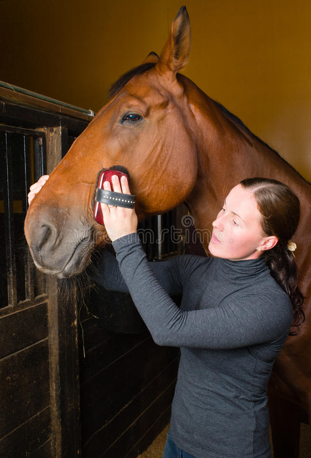 Download Grooming horse stock photo. Image of healthcare, caring - 26430336