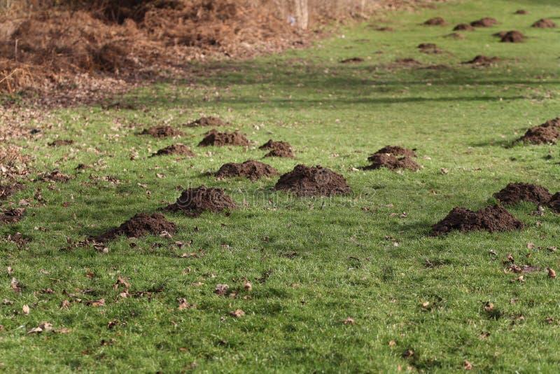 Groot aantal molheuvels royalty-vrije stock fotografie