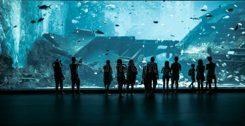 Groot Aquarium in Singapore stock foto's