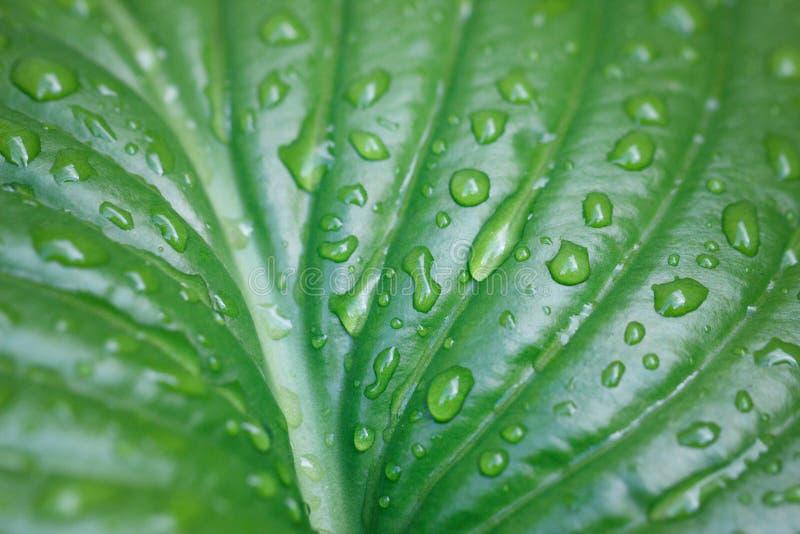 Groot blad met waterdalingen groot stock afbeelding