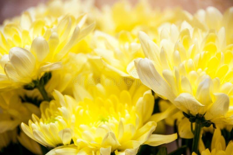 Groot boeket van heldere gele bloemenchrysanten stock foto's