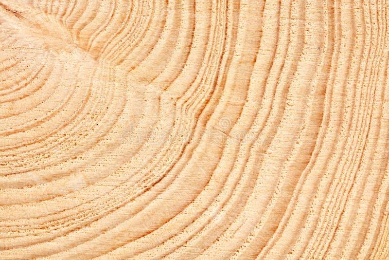 Groot cirkelstuk van houten dwarsdoorsnede met de textuurpatroon van de boomring en barstenachtergrond Gedetailleerde organische  royalty-vrije stock foto