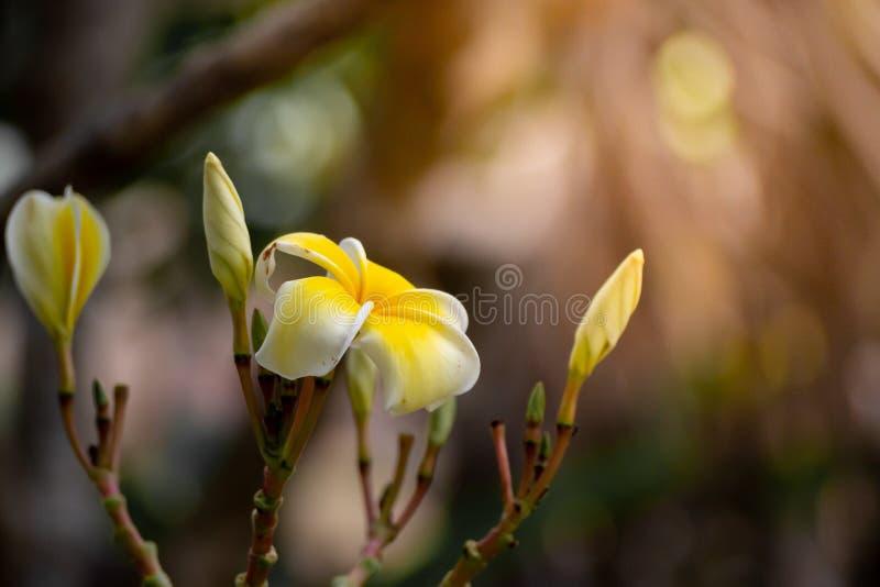 Groot geel bloem warm weerspiegelend licht Als achtergrond van het zonconcept hoopenergie en enthousiasme voor het leven - Beeld stock foto