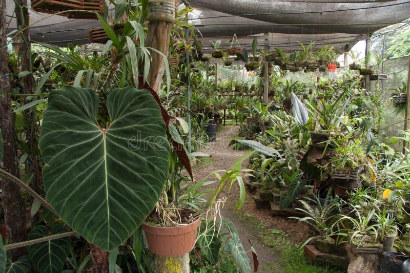 Groot groen blad in een tuin royalty-vrije stock foto